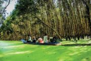 Tra Su forest