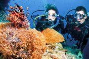 diving coral